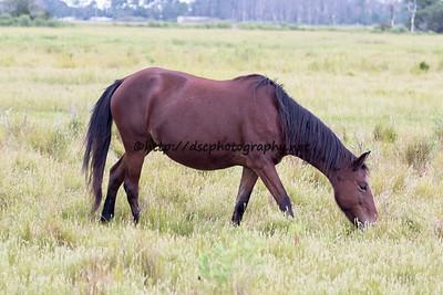 Pappy's Pony