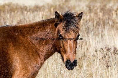 Lady/Pony Ladies' Sweet Surprise