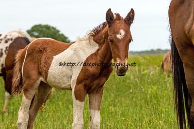 Pony Girl's Bliss