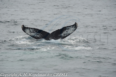 Identified Humpbacks 2002-2014