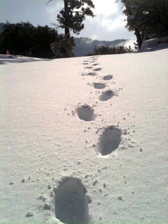 Idyllwild Snow Pics