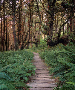 Overgrown Boardwalk