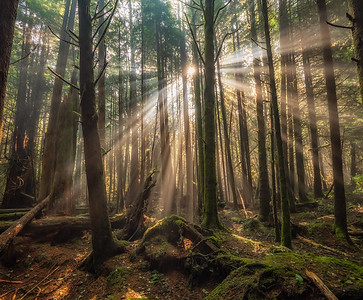 Pacific Rim Rain Forest