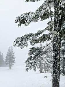 Mount Washington Fog