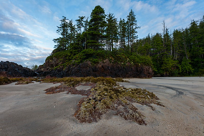 Vancouver Island West Coastline