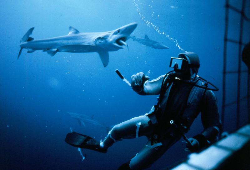 sharksuit