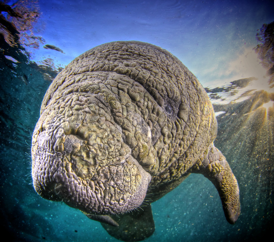 Everything you need to know about shooting Manatee