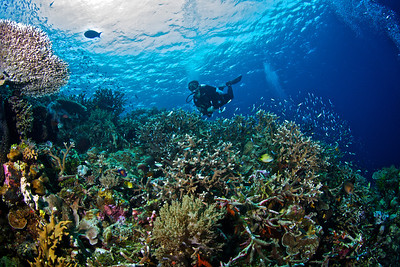 Wide Lens from Wakatobi Ikelite Photo school