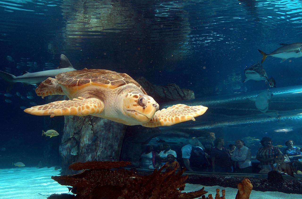 NPA Turtle