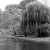 Willow'S Place _ bw