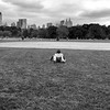 The Great Lawn _bw