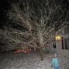 """Ice tree.  Ilia said, """"I think it's dead."""""""