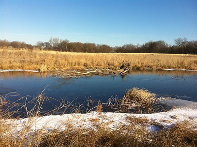 January 9, 2011. Following Bob Vaiden's drections I visited Weaver Park this morning - air temperature ~ 11 F, no wind. I was lucky that a pair of Flickers came to the pond for an early morning drink. It was exciting to see them fly close by.