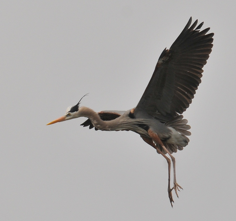 Heron Park April 4, 2010