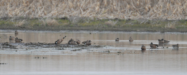 Curtis wetlands, April 11, 2010