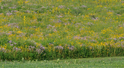 The prairie is gorgeous