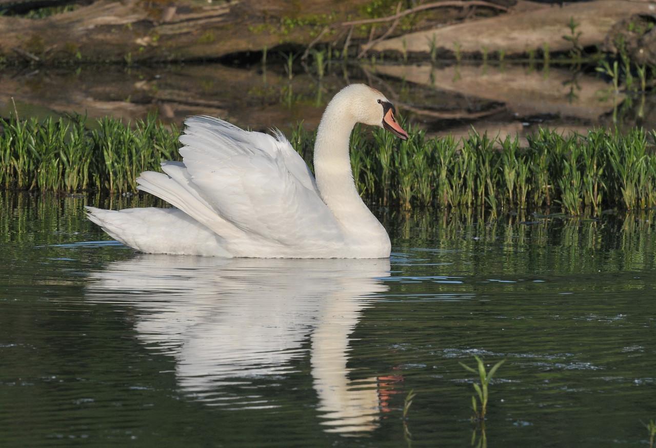 Heron Park, Danville, May 9, 2010