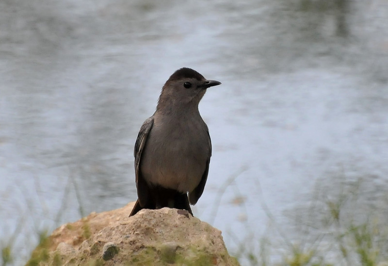 Catbird, Crystal lake