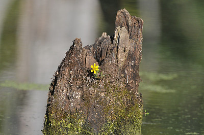 lonely yellow flower - a nice setting for a bird picture