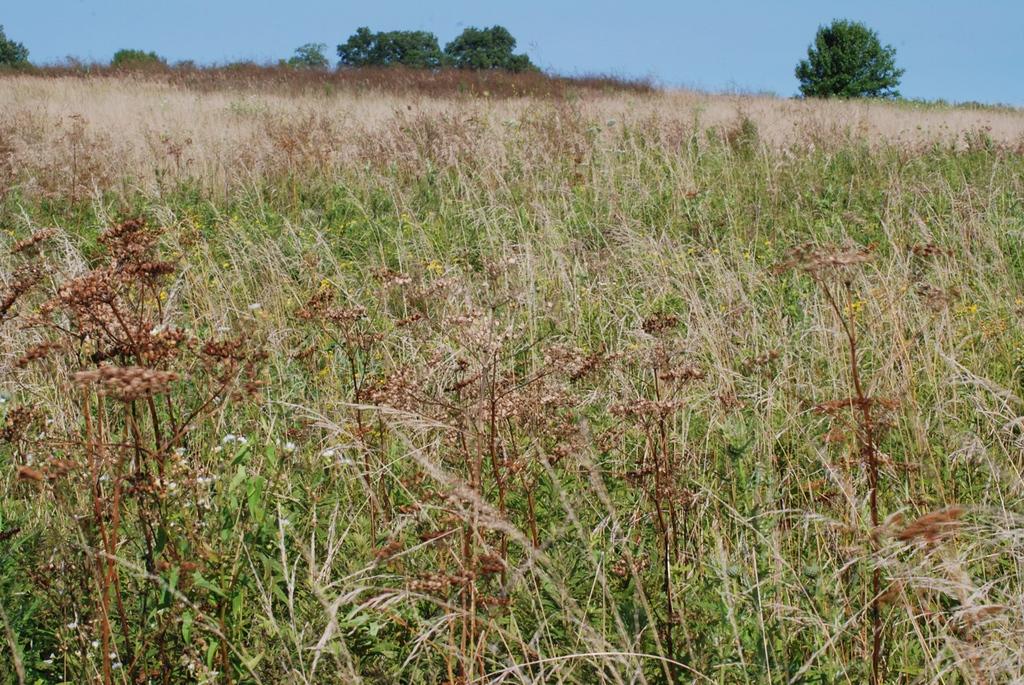sedge wren's habitat