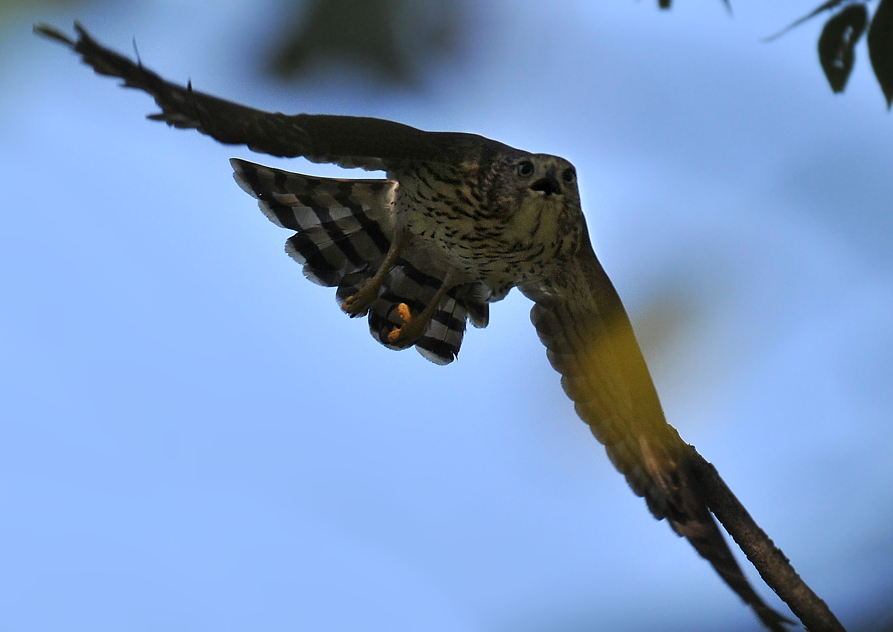 """shouting """"I am hungry"""" and chasing the adult"""
