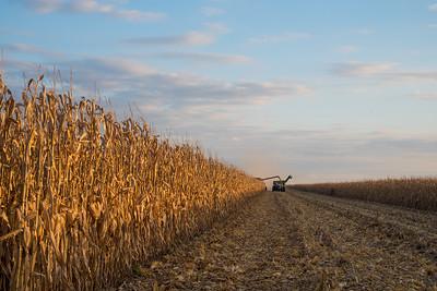 harvest-089