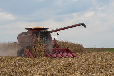 harvest-037