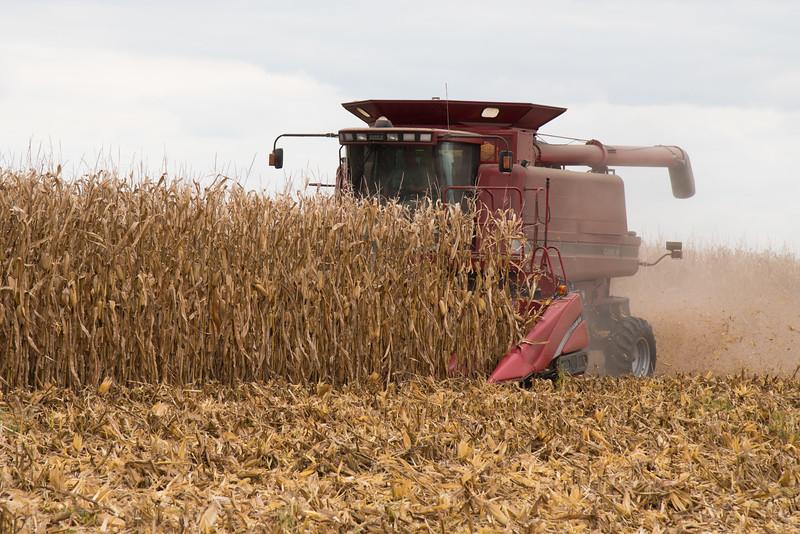 harvest-029
