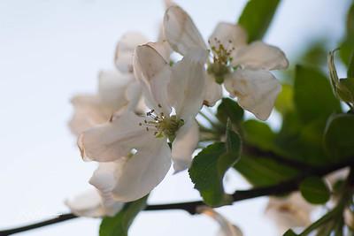 flowers-6525