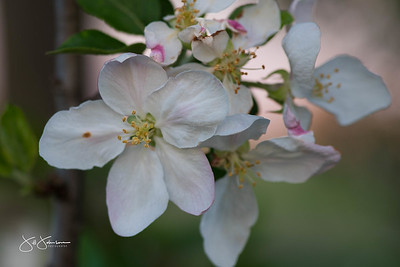 flowers-6492