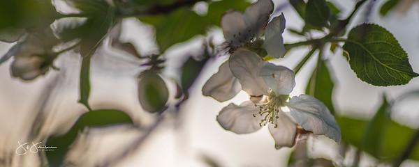 flowers2-6522