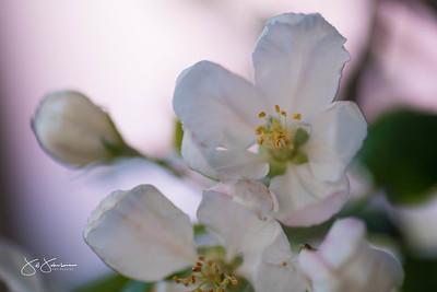 flowers-6530
