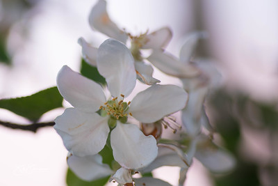 flowers-6527