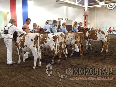 Illinois State Fair Ayrshire Heifer 2015