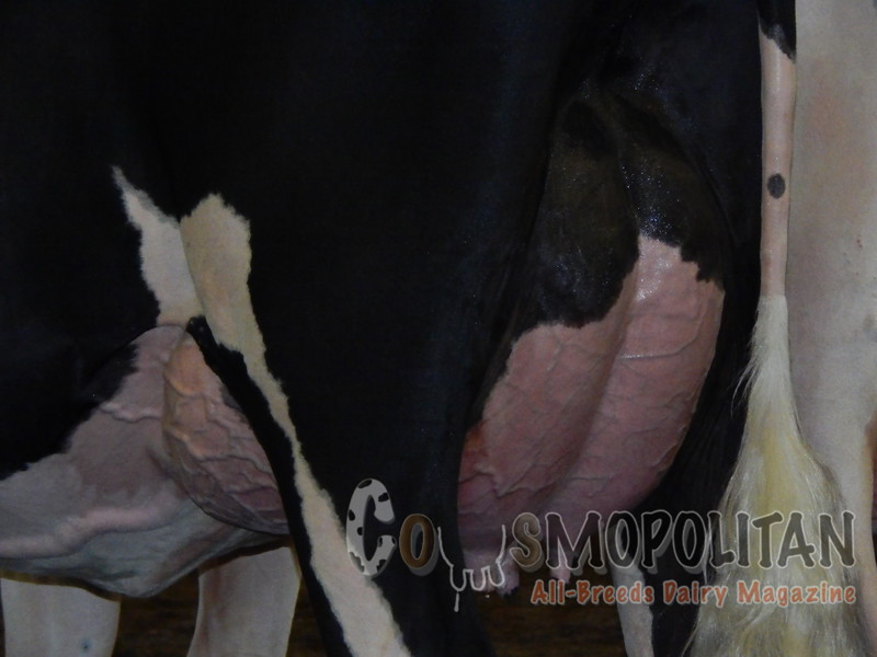 IL_SF_HolsteinCows15_ 014