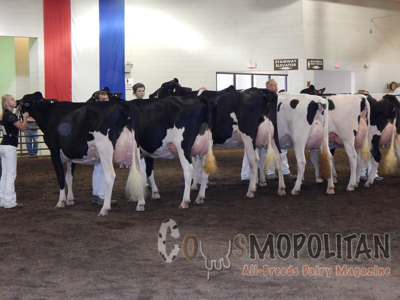 IL_SF_HolsteinCows15_ 049