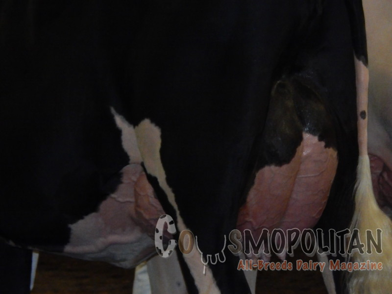 IL_SF_HolsteinCows15_ 002