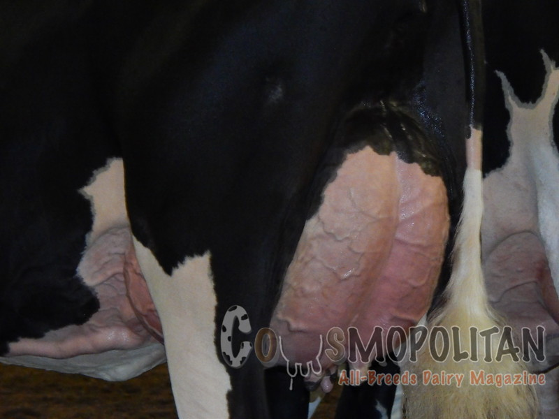 IL_SF_HolsteinCows15_ 025
