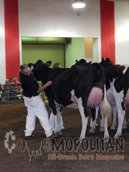IL_SF_HolsteinCows15_ 024