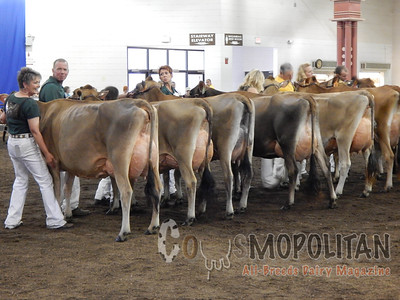 Illinois State Fair Jerseys Cow 2015