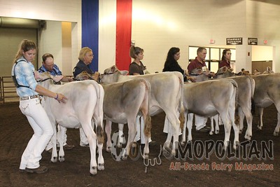IL SF 16 Brown Swiss Show