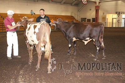 IL SF 16 Milking Shorthorn Show