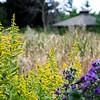 September Flowers by Gazebo