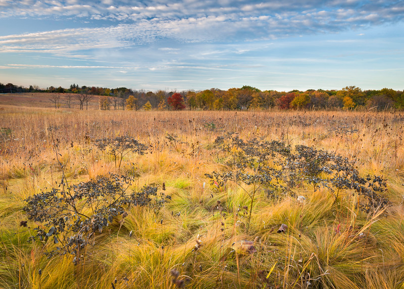ARB 169H<br /> <br /> The tones of the autumn prairie glow in the light of the setting sun at Schulenberg Prairie.  The Morton Arboretum, Lisle, Illinois.