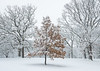ARB 243H<br /> <br /> Fresh snow creates a beautiful winter scene at The Morton Arboretum in Lisle, Illinois.