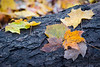 Leaves on a Log