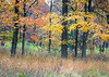 Arb 177H<br /> <br /> Splashes of autumn color paint the trees at The Morton Arboretum in Lisle, Illinois.
