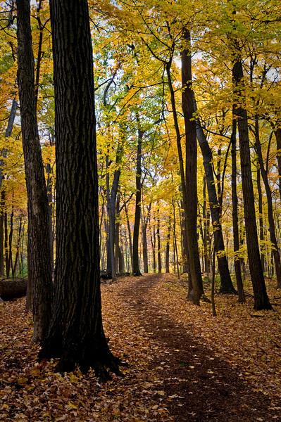 East Woods Trail