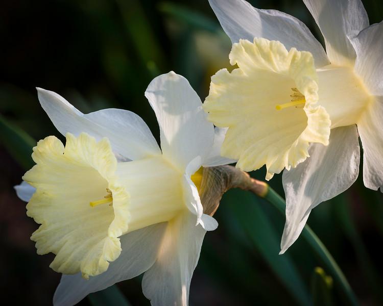 Trumpeting Spring
