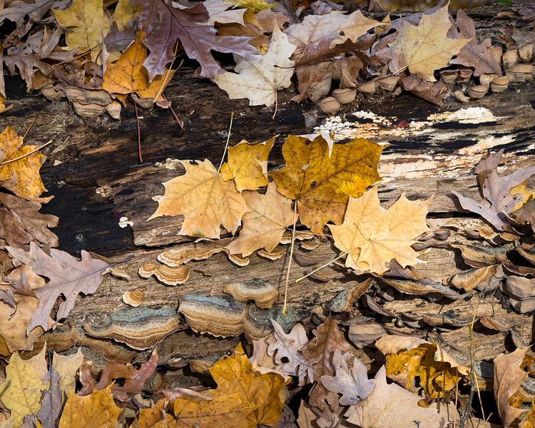 Autumn Decay II